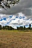 Vit bergnaturmitt, Pinetop Lakeside, Arizona, Förenta staterna arkivfoto