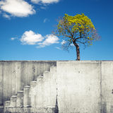 Vit betongvägg med trappan och ovannämnd blå himmel för träd Royaltyfri Fotografi