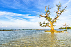 Vit blå himmel för träd och för hav Royaltyfria Foton