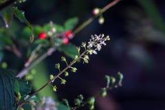 Vit blomma för makro Royaltyfri Fotografi