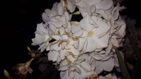 Vit blomma för skönhet Royaltyfri Fotografi