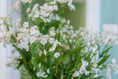 Vit blomma i dagljus jpg Royaltyfri Fotografi