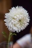 Vit blomma i den glass vasen på träbakgrunden Royaltyfri Foto