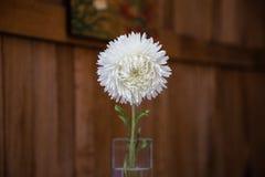 Vit blomma i den glass vasen på träbakgrunden Arkivfoto