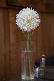 Vit blomma i den glass vasen på träbakgrunden Royaltyfri Bild