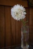 Vit blomma i den glass vasen på träbakgrunden Royaltyfria Bilder