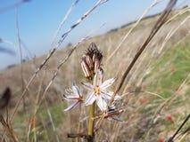 Vit blomma i ett öppet fält royaltyfria foton