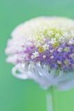Vit blomma i fjäder Arkivfoton