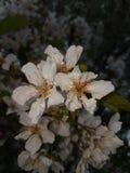Vit blomma i min hemstad Arkivfoto