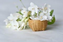 Vit blomma i mycket liten bambukorg Royaltyfri Bild