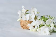 Vit blomma i mycket liten bambukorg Royaltyfri Foto