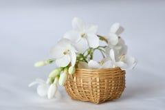 Vit blomma i mycket liten bambukorg Fotografering för Bildbyråer