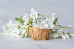 Vit blomma i mycket liten bambukorg Arkivfoton