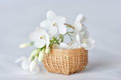 Vit blomma i mycket liten bambukorg Royaltyfria Bilder