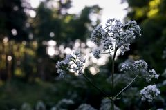 Vit blomma i träna arkivbilder