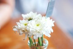 Vit blomma i vas på tabellen med suddighetsbakgrund royaltyfri bild