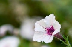 Vit blomma med detaljer i stam Arkivfoton
