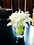 vit blomma med exponeringsglas Arkivbild