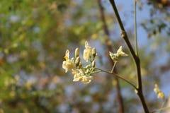 Vit blomma med suddig himmelbakgrund arkivbilder