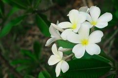Vit blomma mot frodig tropisk tillväxt Royaltyfri Bild