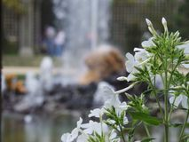 Vit blomma och jätte Arkivfoto