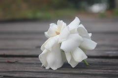 Vit blomma på brädet arkivbild