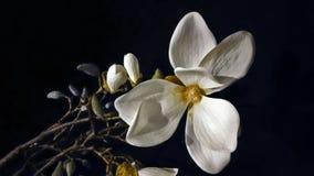Vit blomma på den svarta bakgrunden Arkivfoto