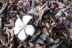 Vit blomma på den torkade tjänstledighetbakgrunden Royaltyfria Foton
