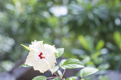 Vit blomma på en suddig grön bakgrund Arkivbilder
