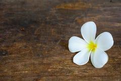 Vit blomma på gammalt trä Royaltyfri Foto