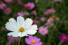 Vit blomma på naturbakgrund Arkivbilder