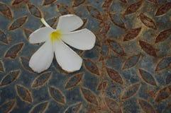 Vit blomma på yttersidor arkivfoton