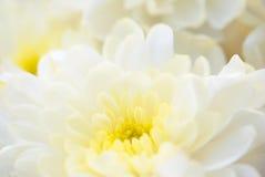 Vit blommanärbild arkivbilder