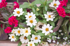 Vit blomning Royaltyfri Fotografi