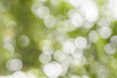 Vit bokeh på grön bakgrund Arkivfoto