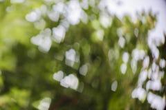 Vit bokeh på grön bakgrund Arkivbilder