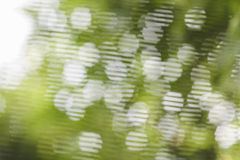 Vit bokeh på grön bakgrund Royaltyfria Bilder