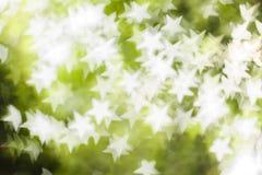Vit bokeh på grön bakgrund Royaltyfria Foton