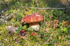 Vit champinjon i skogen arkivfoto