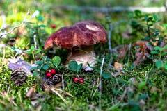 Vit champinjon i skogen royaltyfri fotografi
