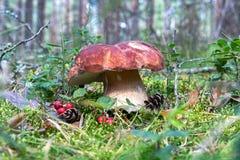 Vit champinjon i skogen royaltyfria bilder