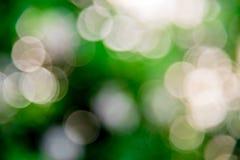 Vit cirkelbokeh på den gröna bakgrunden Royaltyfri Bild
