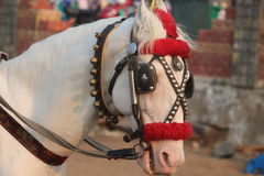 Vit dekorerad häst i ståta Arkivfoto
