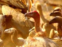 Sydliga afrikanska fåglar Arkivbild
