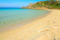 Vit drivved i den Rena Bianca stranden Royaltyfria Bilder