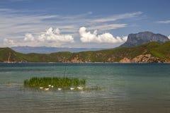 Vit duckar i den härliga sjön Arkivfoton