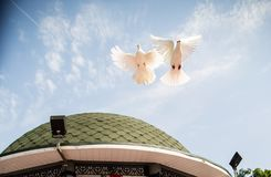Vit duvafluga i himlen tillsammans Arkivbilder