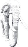 Vit elefant royaltyfri foto