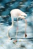 Vit färgsvan eller hägerfågel Arkivfoto