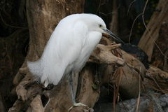 Vit fågel royaltyfri fotografi